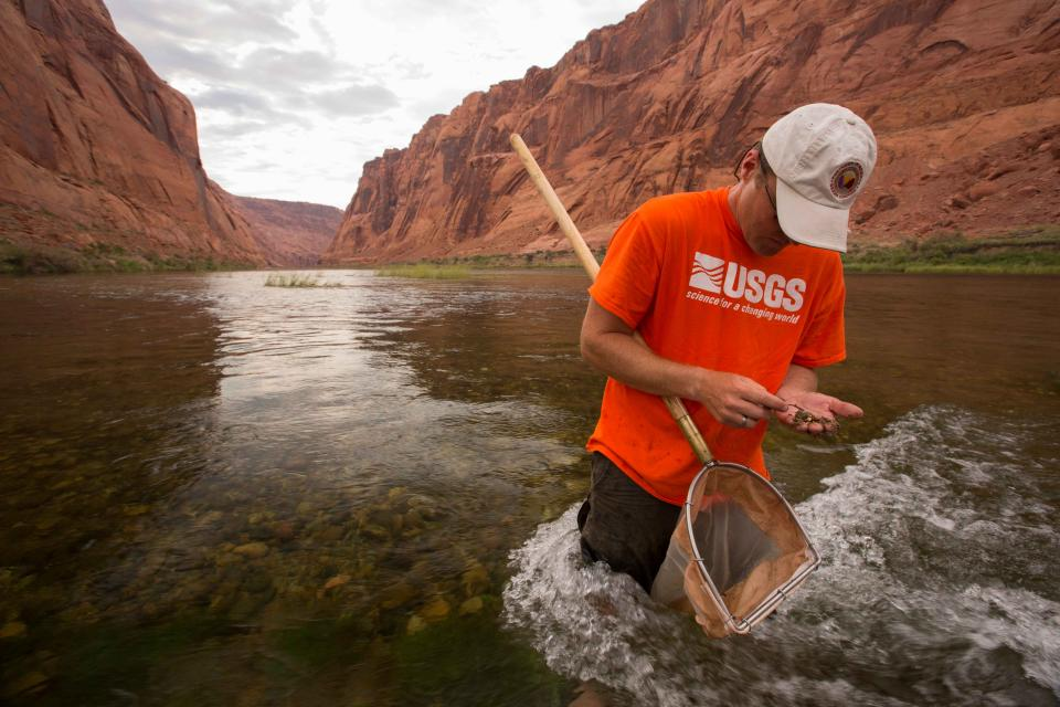 U.S. Geological Survey aquatic biologist Ted Kennedy collects aquatic invertebrates in the Colorado River below Glen Canyon Dam.