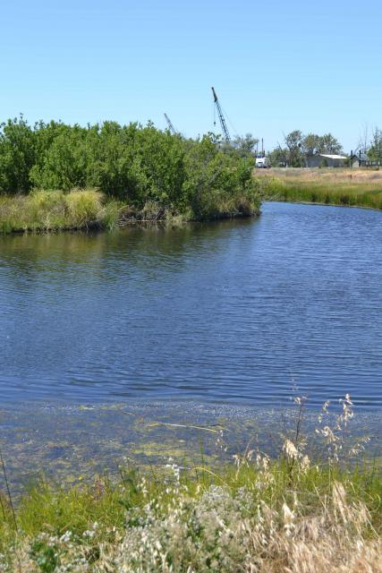 Big Break Regional Shoreline offers habitat for a variety of birds and animals.